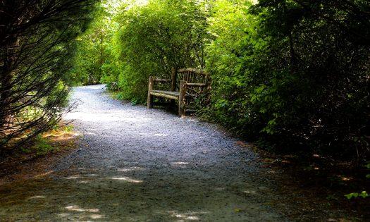 cropped-trail.jpg