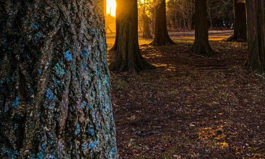 cropped-trees-3.jpg